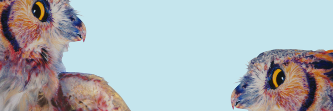 bannière john pusateri hiboux owls