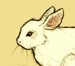 Bunny Contributrice Allez Vous Faire Lire