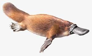 larousse-ornithorynque-allez-vous-faire-lire